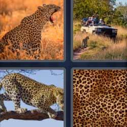 4 fotos 1 palabra nivel 1283