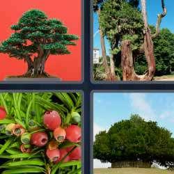 4 fotos 1 palabra 1441