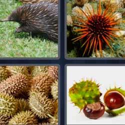 4 fotos 1 palabra 1513