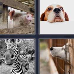 4 fotos 1 palabra 1594